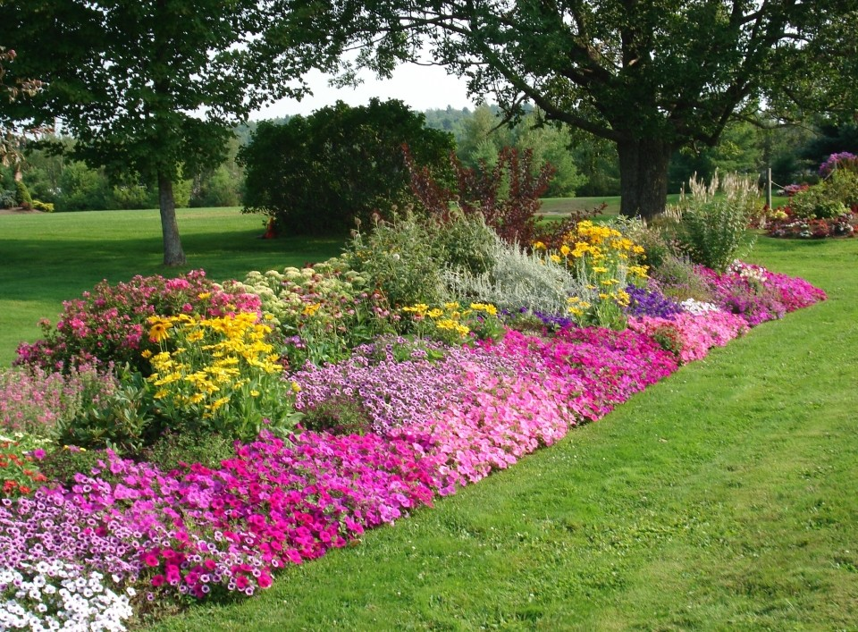 Annuals total lawn care inc full lawn maintenance lawn for Landscape flowers and plants