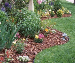 Spring Clean Up and Yard Cleaning Services
