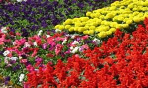Annual and Perennial Garden Flowers in Troy, Birmingham, Royal Oak, Bloomfield, and Rochester MI