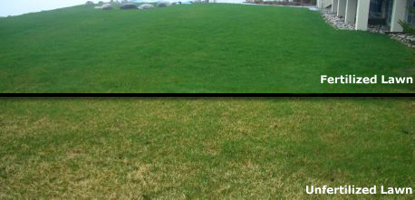 Nitrogen Lawn Fertilizer and Weed Control