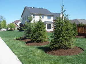 Mulch Installation - Cedar, Pine, Double Shredded Hardwood Bark Mulch
